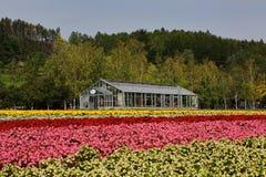 Grünes Haus und Blumen Lizenzfreie Stockbilder