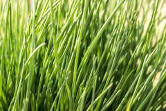 Grünes helles Gras stockfoto