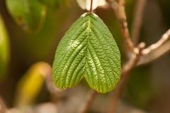 Grünes Herz lizenzfreie stockfotos