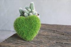 grünes Herz, Buchkaktusblume auf hölzerner Tabelle, Liebe und valentin Stockbilder