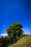 grünes Holz der Natur Lizenzfreie Stockbilder
