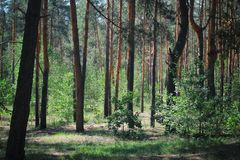 Grünes Holz gruseliger grüner Wald abgetöntes Foto des grünen Waldes lizenzfreie stockfotos