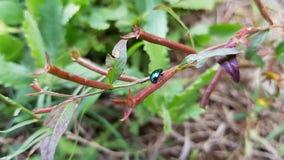 Grünes Insekt auf Anlage im Wald stockfoto
