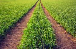 Grünes junges Erntefeld mit den Bahnen zu folgen lizenzfreies stockbild