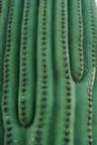 Grünes Kaktus-Muster Lizenzfreies Stockbild