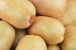 Grünes Kiwi Actinidia deliciosa Lizenzfreie Stockfotos