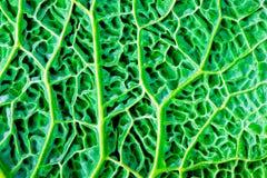 Grünes Kohlblatt Lizenzfreies Stockbild