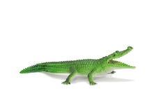 Grünes Krokodil, Krokodil Lizenzfreies Stockbild