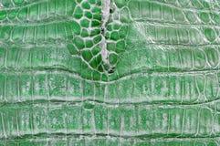 Grünes Krokodilleder Lizenzfreie Stockfotos