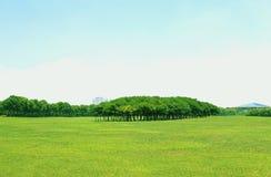 Grünes Land Stockfotografie