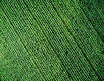 Grünes Landfeld mit Reihe zeichnet, Draufsicht Lizenzfreie Stockbilder