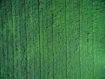 Grünes Landfeld mit Reihe zeichnet, Draufsicht Lizenzfreies Stockfoto