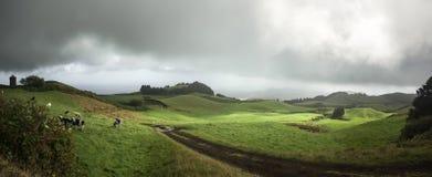 Grünes Landschaft-Azoren-Sao Miguel Portugal stockfoto