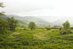 Grünes Landschaftsfeld Lizenzfreie Stockbilder
