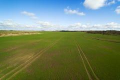 Grünes landwirtschaftliches Feld Stockbild