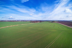 Grünes landwirtschaftliches Feld Lizenzfreies Stockbild