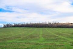 Grünes landwirtschaftliches Saufeld und blauer Himmel im Land am schönen Sommertag Lizenzfreie Stockbilder