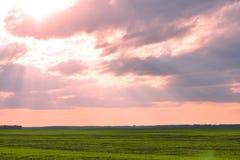 Grünes Landwirtschaftsfeld und blauer Himmel Stockbild