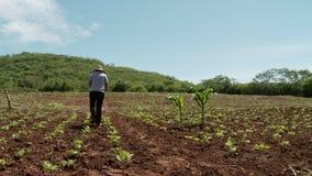 Grünes Landwirtschaftshandbuch stock video