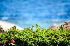 Grünes Laub auf einem Hintergrund von blauem Meer Stockbilder