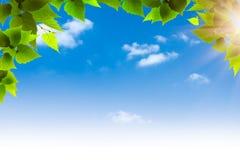 Grünes Laub gegen blaue Himmel Stockfotos