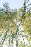 Grünes Laub im Mai Lizenzfreie Stockbilder