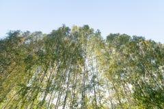 Grünes Laub im Mai Lizenzfreies Stockbild