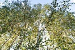 Grünes Laub im Mai Stockfoto