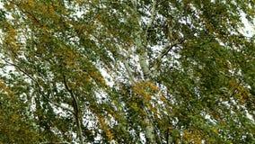 Grünes Laub im Mai Stockfotos