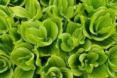 Grünes Laub mit Niederschlag Stockbild