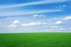 Grünes leeres Feld Stockfotos