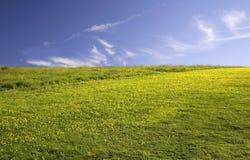 Grünes leeres Feld mit Gelb Stockfoto
