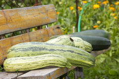 Grünes Mark und Zucchinis Lizenzfreie Stockfotos