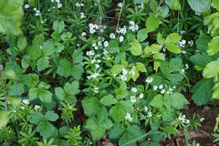 Grünes Material-Blume Stockfotos