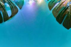 Grünes monstera verlässt auf blauem Hintergrund mit geführter Neonbeleuchtung Modischer tropischer Hintergrund für Ihre Projekte stockfotos