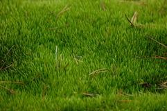 Grünes Moos stockbild