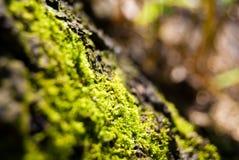Grünes Moos Lizenzfreies Stockbild