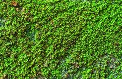 Grünes Moos Stockfotos