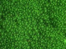 Grünes Moos Lizenzfreies Stockfoto
