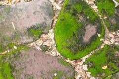 Grünes Moos auf altem Stein Lizenzfreies Stockfoto