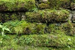 Grünes Moos auf alter Backsteinmauer Stockfoto