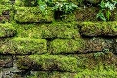 Grünes Moos auf alter Backsteinmauer Stockfotos