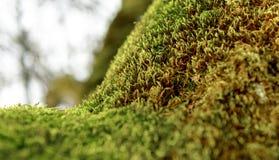 Grünes Moos auf Baumkabel Stockfotos