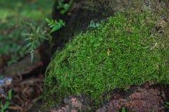 Grünes Moos auf dem Baum stockbild