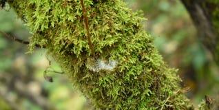 Grünes Moos auf dem Baum Biologie und Anlagen im Wald lizenzfreies stockfoto