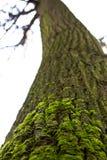 Grünes Moos auf dem Baumkabel Lizenzfreies Stockbild