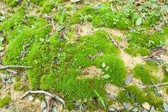 Grünes Moos auf dem nassen Bereich Stockfoto