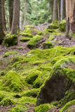 Grünes Moos auf dem Waldboden stockfotos