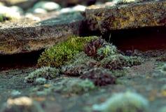 Grünes Moos auf einem antiken, alten mit Ziegeln gedeckten Dach Frühling stockfotografie