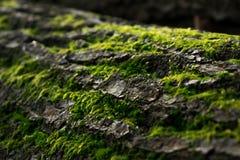 Grünes Moos auf einem Baum stockfoto